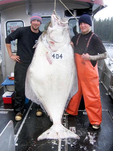 Catching A 404 Pound Halibutsitka Alaska Fishing Lodge Wild