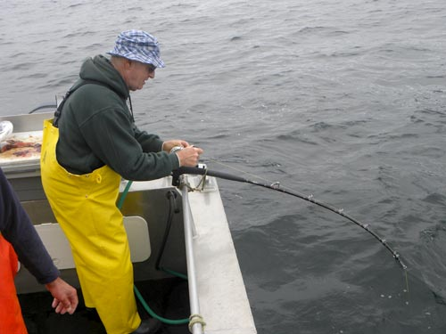 """Reeling in a Halibut on a """"meat stick"""""""