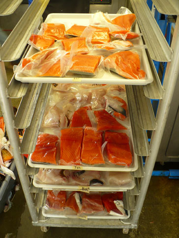 Fish on racks, ready to be put in the freezer.