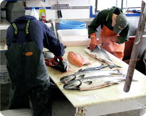 Fish Processing from Cabin