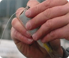 Baiting a Salmon hook with cut plug herring