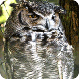 bald eagle, alaska raptor center, eagles, sitka alaska, owls