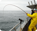 Salmon Fishing Rod