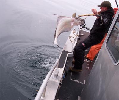 05 26 2009 Landing a nice halibut All in a days work