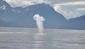 A whale spout in Sitka, AK