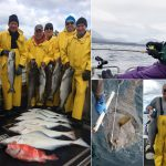 06-04-2017 A solid round of fish and an 80 lb. releaser halibut from Kathy!