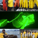 "07-29-2017 A Lingcod caught in the ""limelight"" at 200 feet!"