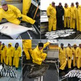 08-17-2017 Silver salmon action & some releaser halibuts!